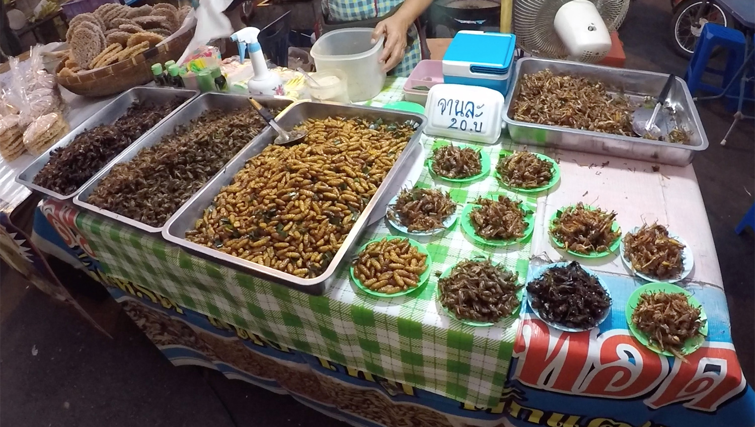 insectes marché ayutthaya