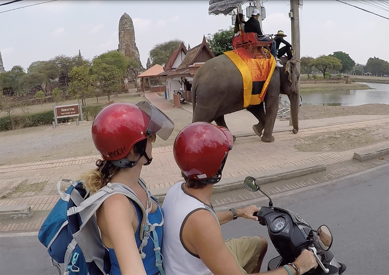 scooter élephants ayutthaya